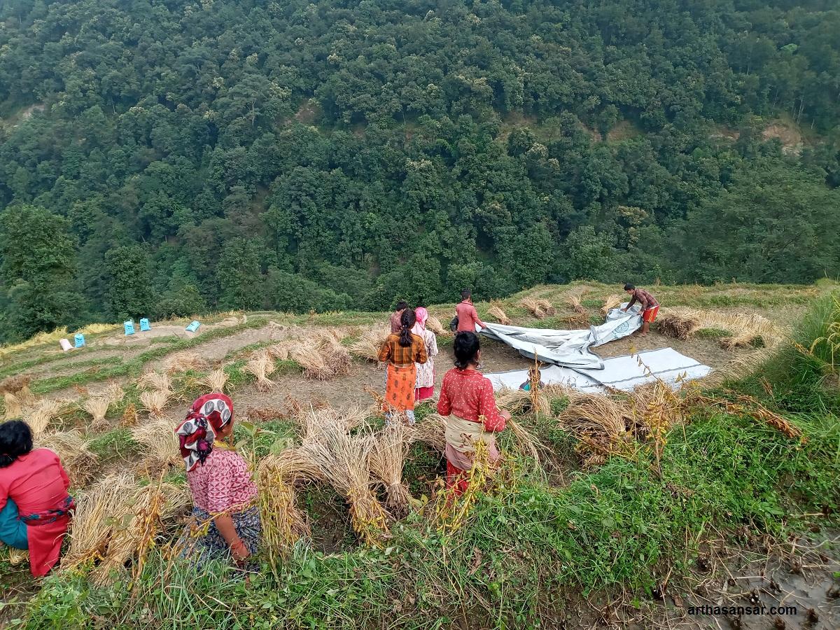 यस वर्षको दशैँ : सुनसान गाउँघर, किसानहरुलाई मङ्सिर भित्र्याउनै चटारो (फोटोफिचर)