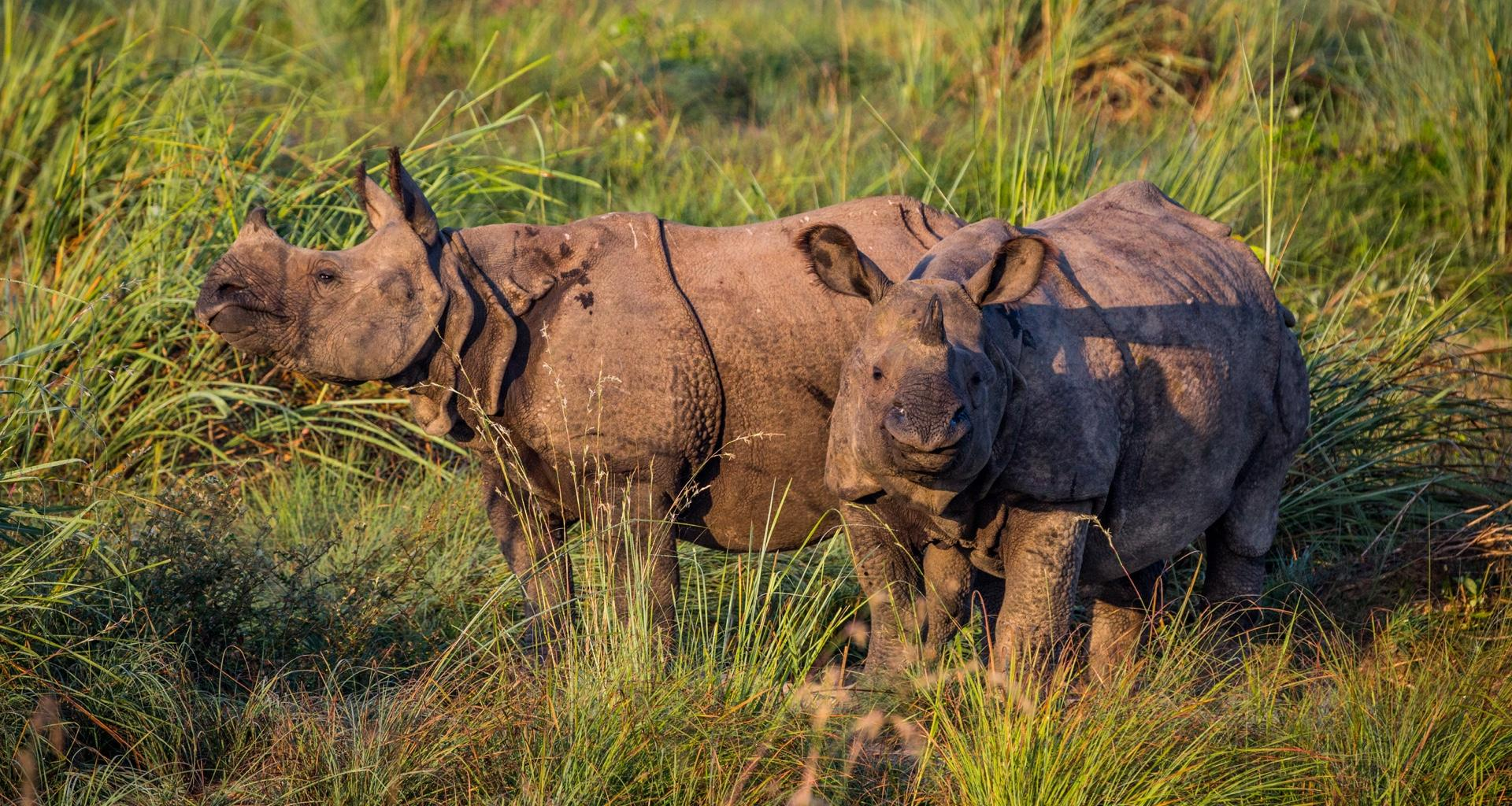 Two rhinos dead on single day